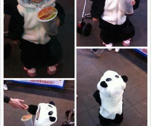 cute, panda, and baby image