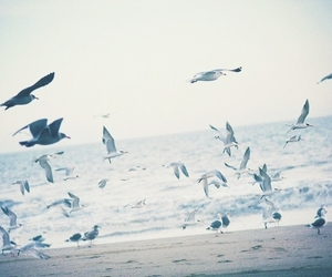 bird, sea, and beach image