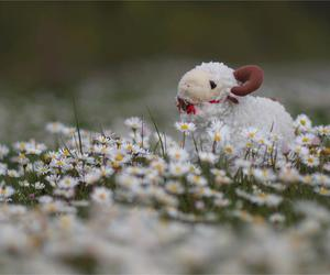 adorable, fluffy, and flowers image