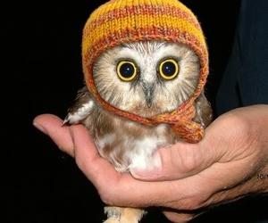 adorable, animal, and eyes image