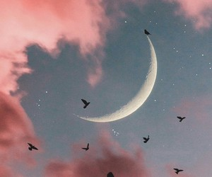 wallpaper, moon, and bird image