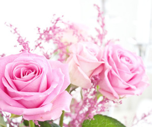 pretty, roses, and love image