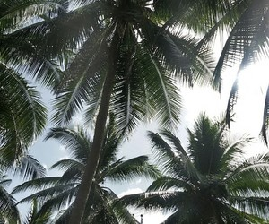 background, palm trees, and trees image