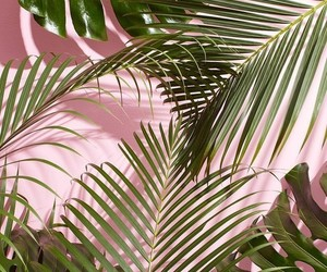 pink, plants, and pink wall image