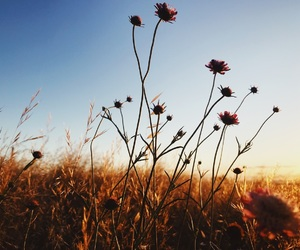 flowers, photography, and golden hour image