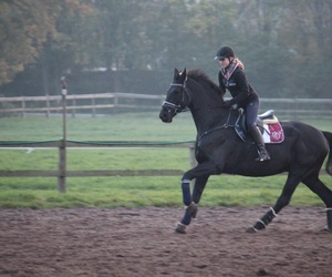 autumn, cold, and equestrian image