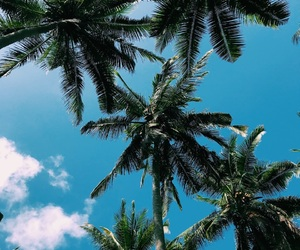bali, blue, and coconut image