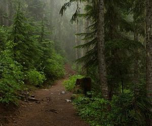 fantasy, pagan, and forest image