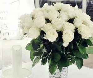 beauty, nice, and roses image