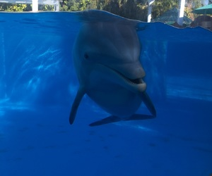dolphin, orlando, and seaworld image