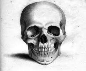 skull and drawing image