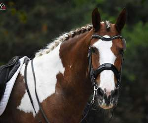 dressage, free, and horse image