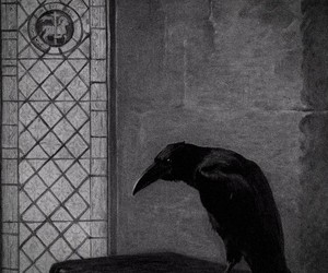 crow, dark, and black and white image