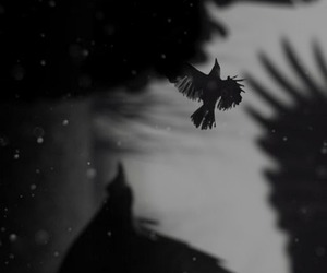 black and white, gothic, and crows image