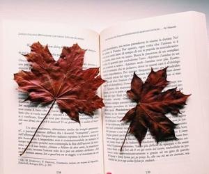 autumn, books, and italian image