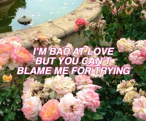 aesthetic, flowers, and song lyrics image