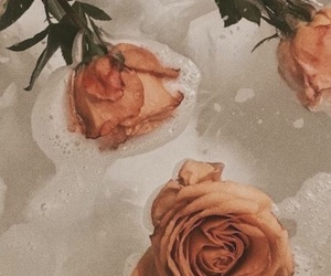 aesthetics, flowers, and Lyrics image