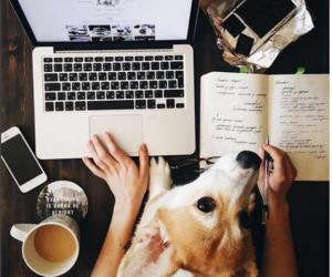 dog, coffee, and book image