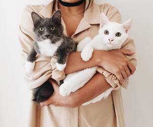 animal, love, and cat image