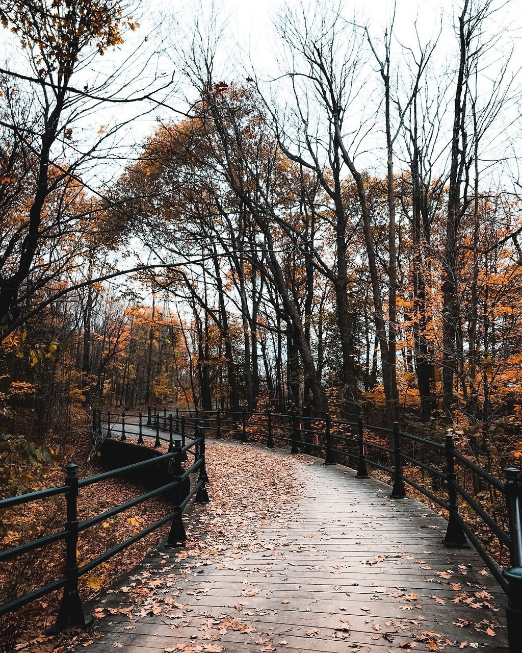 fall, autumn, and nature image