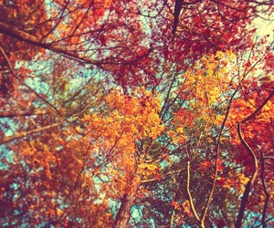 autumn, fall, and tree image