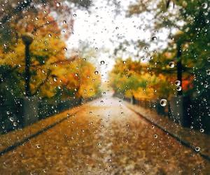 autumn and rain image