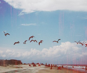 bird, beach, and sky image