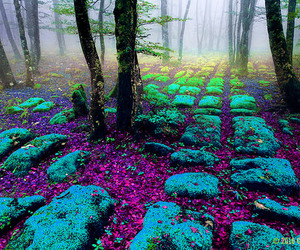 blue, forest, and green image