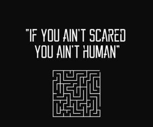 maze runner and thomas image
