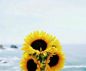 bright, flower, and sun image