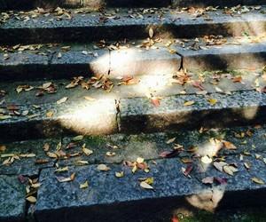 autumn, shrine, and 木漏れ日 image
