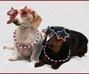 dachshunds, star, and eyeglasses image