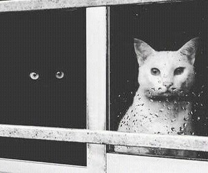 black and white and cats image