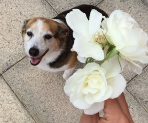 aesthetic, dog, and rose image