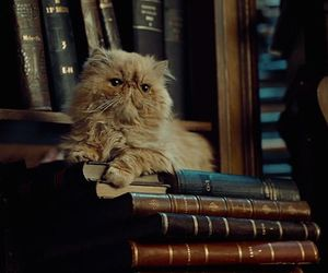 animal, cat, and harry potter image