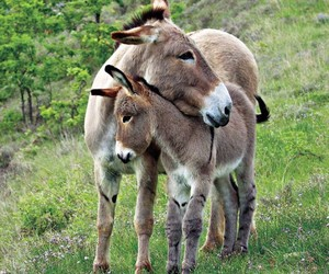 cute animals and donkey image
