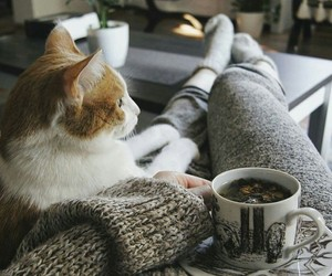 cat and home image