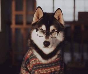 dog, animal, and glasses image