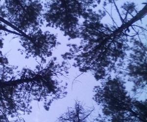 loneliness, sky, and fri-tree image