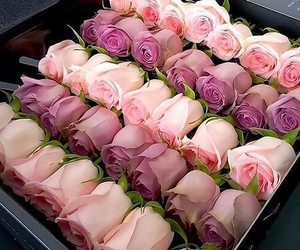 flower, pink, and roses image
