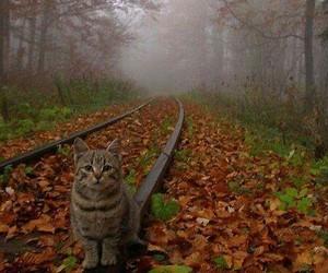 autumn, leaves, and railroad image