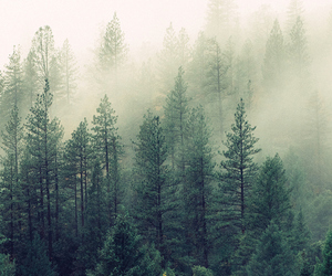 forest, background, and wallpaper image