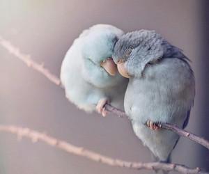 bird, love, and animal image