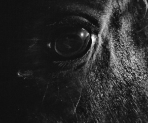 eye, horse, and 🌌 image