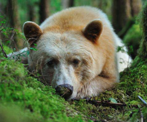 animals, bear, and light image