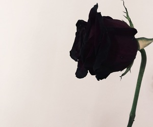 black, dying, and flower image