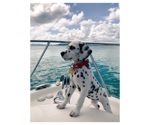 b&w, beach, and dalmatian image