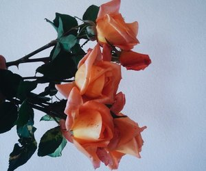 rose, aesthetic, and alternative image