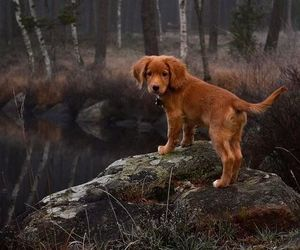 animal, pretty, and puppy image