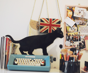 cat and room image